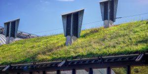 La toiture végétale fait fureur en Belgique